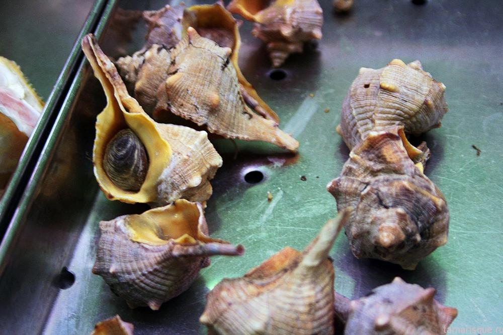 Murex brandaris L. (Bolinus brandaria)