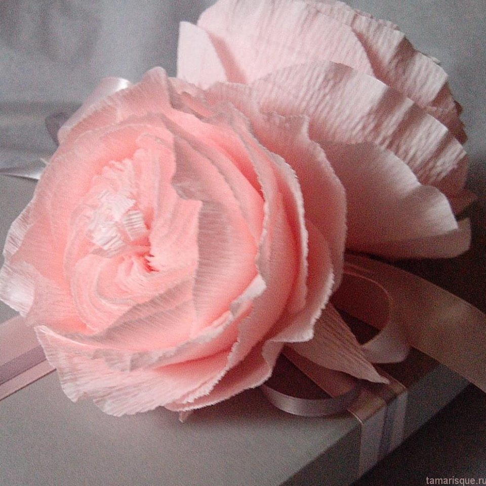 Розы Джульетты