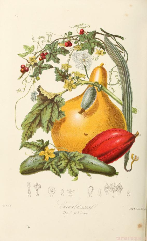 Ботанические иллюстрации 19 века